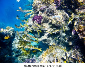 Tropical fish on the coral reef