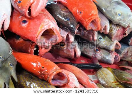 Tropical Fish Sale Market Stock Photo (Edit Now) 1241503918