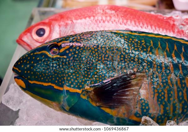 Tropical Fish Sale Market Stock Photo (Edit Now) 1069436867