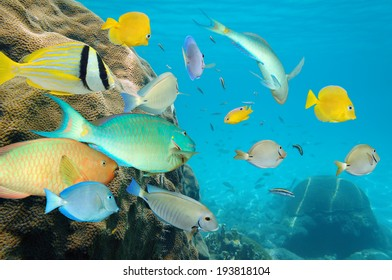 Tropical fish school in a coral reef of the Caribbean sea