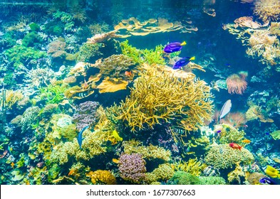 Tropical fish in a sea aquarium in the sea in blue optics