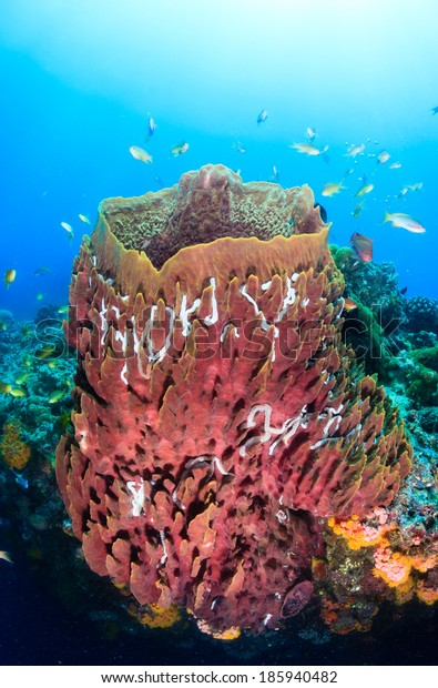 Tropical fish swarm around a large barrel sponge on a coral reef