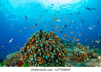 Tropical fish swimming around a beautiful coral reef