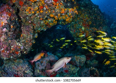 Tropical fish swimming around a colorful tropical coral reef in Thailand