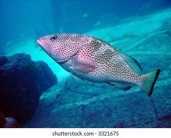 Tropical fish swimming inside an aquarium fish tank