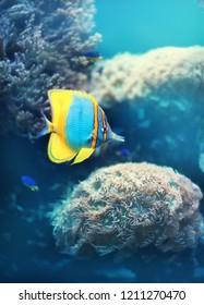 Tropical fish. Underwater world