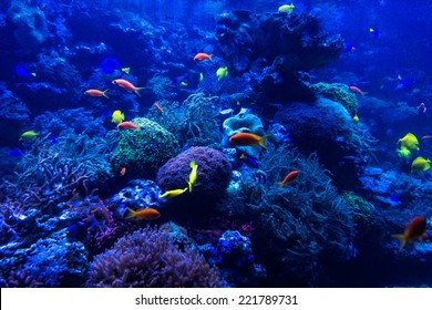 tropical fishes meet in blue coral reef sea water aquarium. Underwater paradise
