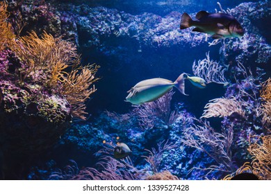 Tropical fishes on the coral reef in  aquarium - Image