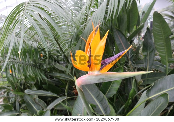 Tropical flora with a flower in the front.