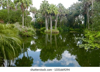 Tropical Florida lake, palm trees, and lily pads, with sky and clouds reflecting in the water