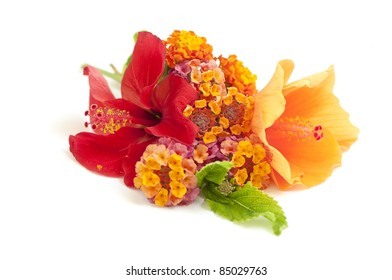 Tropical flower arrangement on white (Lantana flovers and hibiscuses)
