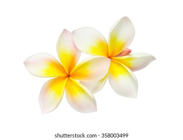 Tropical flower frangipani isolated on white background