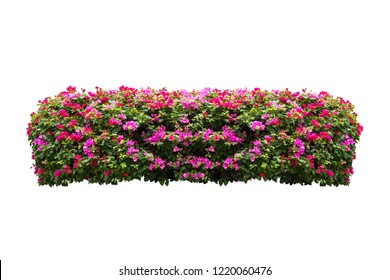 tropical flower plant bush tree isolated on white background with clipping path