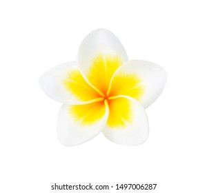 Tropical flowers frangipani (plumeria) isolated on white background. Top view