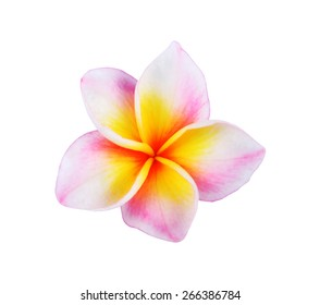 Tropical flowers frangipani (plumeria) isolated on white background.