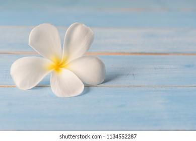 Tropical flowers frangipani (plumeria) on blue background