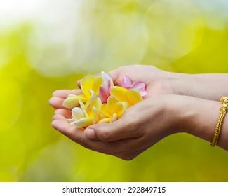 Tropical flowers frangipani (plumeria) in woman hands