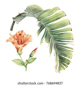 Tropical flowers, hibiscus and palm leaf, watercolor