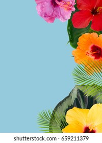 tropical flowers and leaves - border of fresh multicilored hibiscus flowers and exotic palm leaves on blue background