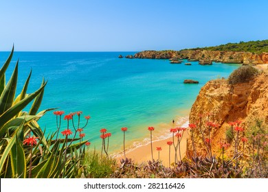 Tropical flowers on beautiful Praia da Rocha beach, Algarve region, Portugal