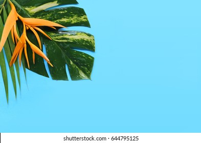 tropical flowers on a blue background