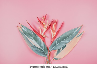 tropical flowers and summer concept from colorful flat lay and web banner design from heliconia with beauty leaf on pink vintage background