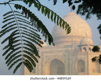 tropical foliage with the domes of Taj Mahal soft in the background