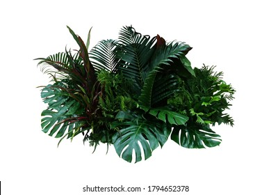 Tropical foliage plant bush (Monstera, palm leaves, Calathea, Cordyline or Hawaiian Ti plant, ferns, and fir) floral arrangement indoor garden nature backdrop isolated on white with clipping path. - Shutterstock ID 1794652378
