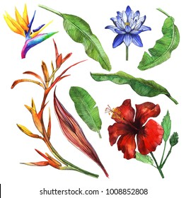 Tropical foliage set with exotic flowers. Watercolor Hibiscus, water lily, lotus, banana leaves