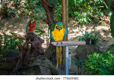 In the tropical forest among the branches of the feeder for a large multi-colored parrots sitting on a pole.