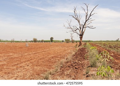 Tropical forest deforestation due to farming and increase in agricultural mechanization Asia