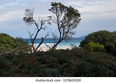 Tropical forest with hidden beach bay