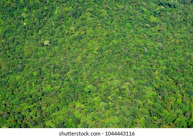 Tropical forest on Langkawi Island, Malaysia, Asia
