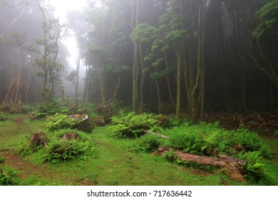 Tropical forest at Pozo da Alagoinha, Azores, Portugal, Europe