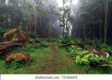 Tropical forest at Pozo da Alagoinha, Azores, Portugal, Europe