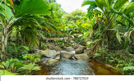 tropical forest scene in Seychelles.  this is taken looking away from the waterfall and down the river.