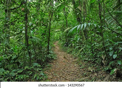Tropical Forest Trail, Costa Rica