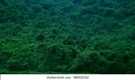 tropical forest view in Asian country , green nature texture, jungle view background