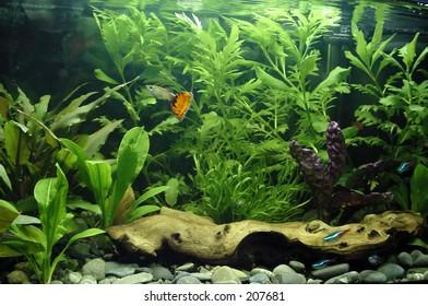 1000 freshwater aquarium plants pictures royalty free images