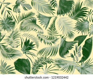 tropical frond palm leaf for summer background
