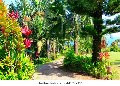 A tropical garden with flowers and palm trees overlooking the ocean with blue sky. Garden Of Eden, Maui Hawaii