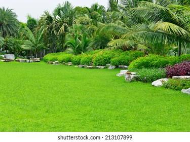 the tropical garden palm tree