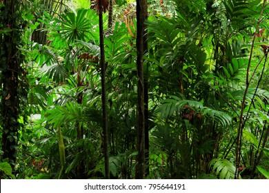 Tropical Garden, Queensland, Australia