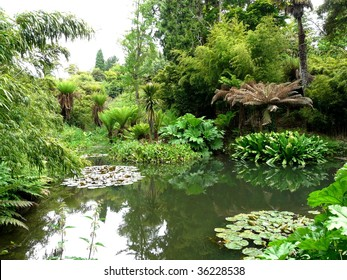 Tropical gardens at the Lost Gardens of Heligan in Cornwall, England