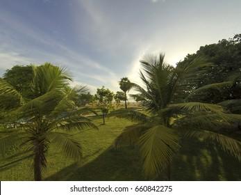 Tropical gardens at sunrise, Sri Lanka