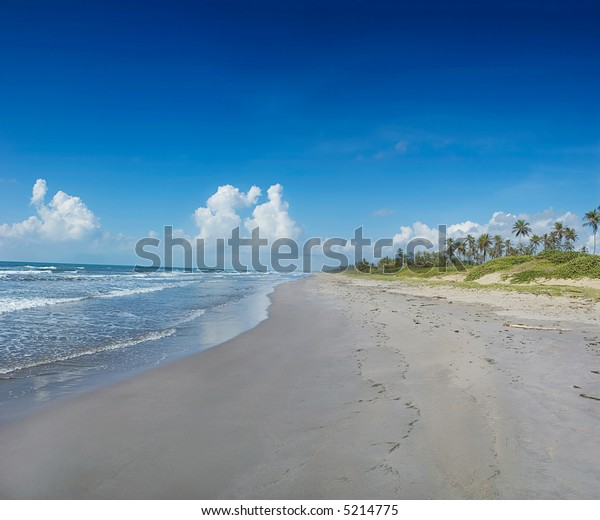 Tropical golden sand beach with Coconut trees