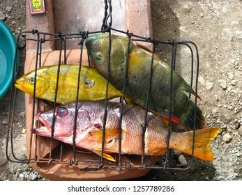 tropical gorontalo indonesia coral reef fish