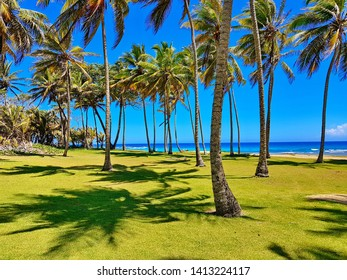 Tropical green Beach with Palms in the dominican republic