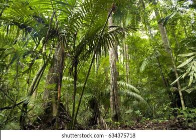 Tropical green forest landscape, Taman Negara, Malaysia.
