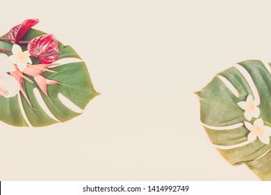 Tropical green fresh monstera leaves and exotic flowers on pink background with copy space, flat lay, toned